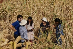 Field trips - chickpea and sorghum